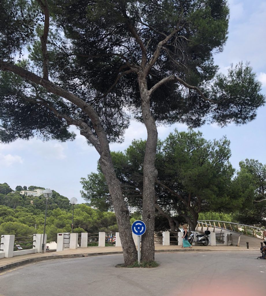 Rotonda entrada al camino