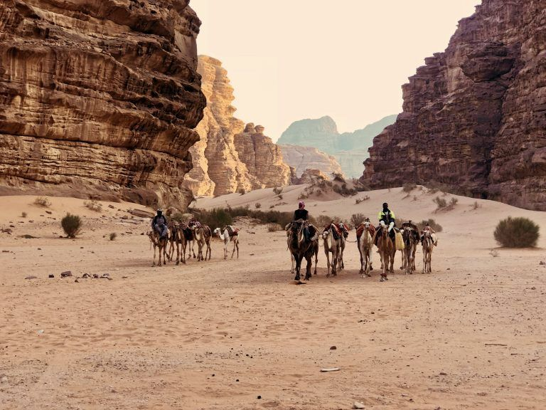 Camellos andando por el desierto de Wadi Rum