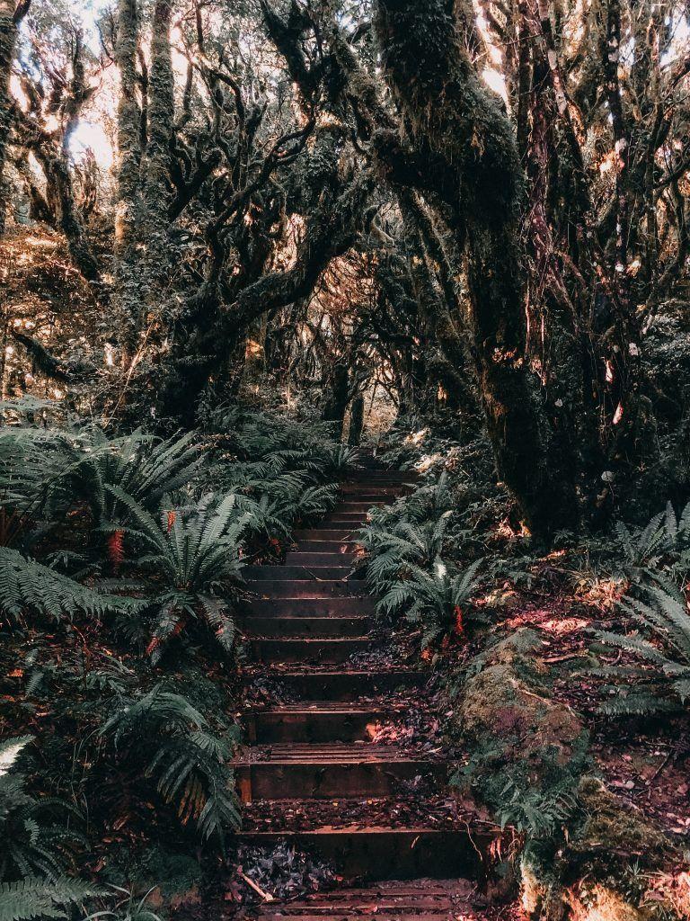 Track del Taranaki